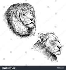 head lion lionesshand drawn sketch vector stock vector 655196308