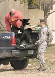 belgian shepherd us army base hosts dod military working dog trials navy handler claims