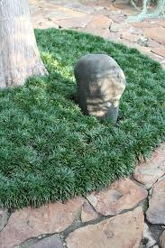 best 25 perennial grasses ideas on grasses