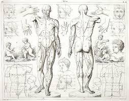 115 best anatomia images on pinterest human anatomy anatomy art