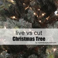 live christmas tree christmas trees live container tree vs cut tree