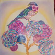 animal kingdom colouring book bird 53 pinta colorea images