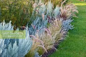 gap gardens ornamental grass border with artemisia ludoviciana