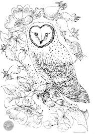 barn owl and roses colouring page the barn owl trust