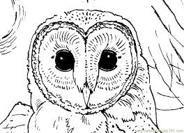 owl face printable coloring page for kids and adults coloring