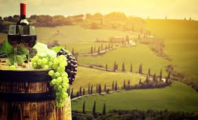 wallpapers tuscany italy wine barrel grapes fields food stemware