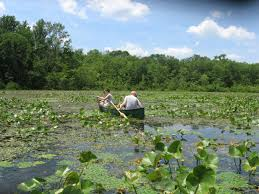 native plants of pa research summary tracking water chestnut and other invasive