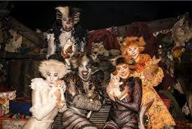 bring home a cat for free from the aspca u0027s u0027cat friday u0027 adoption