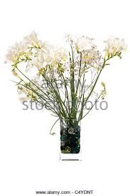 Flowers In A Vase Images Flowers In Vase Stock Photos U0026 Flowers In Vase Stock Images Alamy