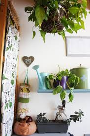 Small Indoor Trees by 17 Best Landscape Indoor Plants Images On Pinterest Watering