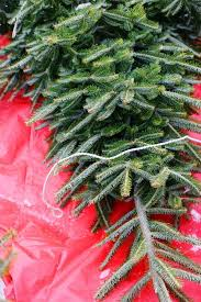 100 christmas tree farm asheville nc best 25 fraser fir