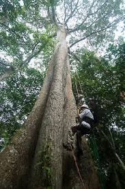 tropical tree climbing manaus 2018 all you need to before
