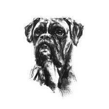 boxer dog art boxer dog sketch print products dog art and dogs