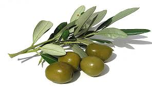 italian olives why choose suma italian olive suma wholefoods