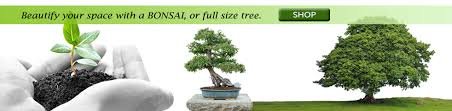 welcome to tree in a box producers of finest tree seed kits
