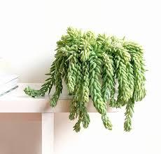 si e suspendu 50 beau plante interieur ombre pour luminaire suspendu images