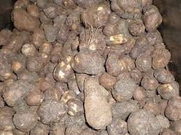 Chinese Root Vegetables - what vegetables in your country are special from other countries
