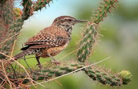 native plants for wildlife habitat and conservation landscaping featured stories pacific southwest region