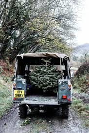 how to choose a real christmas tree real christmas tree care tips