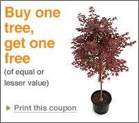 home depot b1g1 tree printable coupon