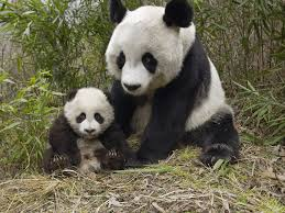a mother u0027s love 40 adorable animal mom and baby photos