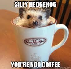 Silly Meme - 25 adorable hedgehog memes