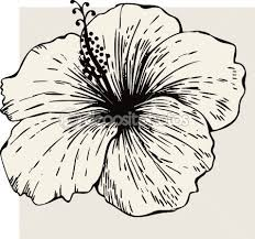 16 best hibiscus flower tattoo outline images on pinterest diy