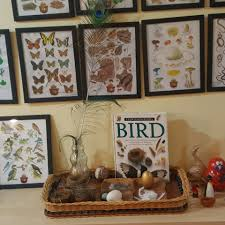 birds nests and birdhouses lesson planning ideas daycare