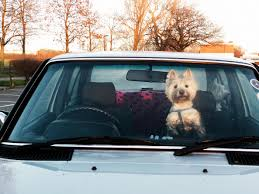 through the glass dog doors overheated dog in a car bill would permit citizens to perform a