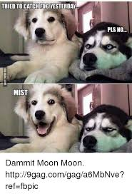 Moon Moon Meme - 25 best memes about dammit moon moon dammit moon moon memes
