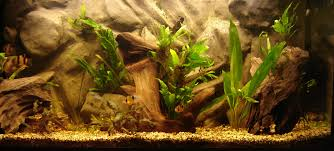 halloween fish tank background aquarium wallpapers group 65