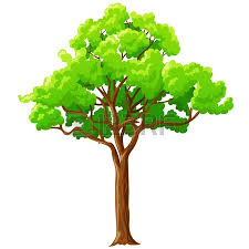 big green tree isolated on white background vector
