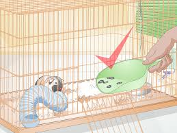 Cages For Guinea Pigs 3 Ways To Clean Up After Your Guinea Pig Wikihow