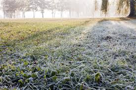 how to prepare your lawn for winter in dallas tx