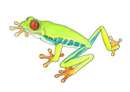 draw rainforest frog 6 steps pictures wikihow