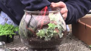 Indore Plants How To Plant A Glass Jar Terrarium Youtube