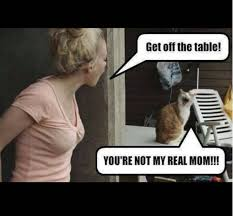 Cat Playing Piano Meme - cat memes that will have you cracking up