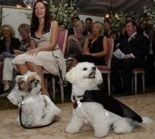 cute dogs pictures fancy dress