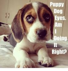 Puppy Eyes Meme - captionsby ilovefunnydogs co puppy dog eyes am doing right meme on