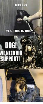 This Is Dog Meme - hello yes this is dog dog we need air support yes this is dog