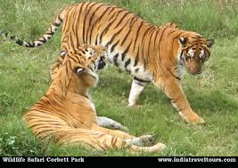 wildlife tours images Wildlife tours in india blog jpg
