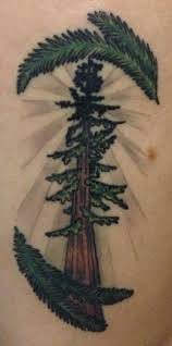 redwood tree diana diego tattoo tattoos