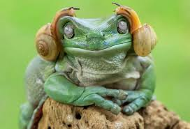 psbattle a frog with snails on its head resembling princess leia