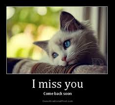 I Miss U Meme - this is bonkerz i miss you cat meme