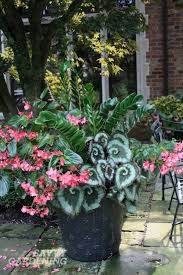 design for potted plants for shade ideas container gardening