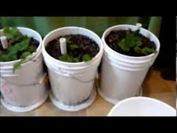 Diy Self Watering Herb Garden Easiest How To Make Self Watering Sub Irrigated Planters With 5