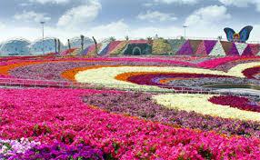 wanderlust dubai miracle garden u2013 sky blue pink
