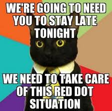 Meme Quiz - quiz which cat meme are you
