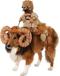 headless horseman costume headless horseman costume for large dogs going to the dogs