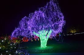 Lights At The Zoo by The Outlaw Gardener On The Ninth Day Of Christmas Zoo Lights The